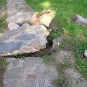 Zničený chodník po vyvrátení stromu